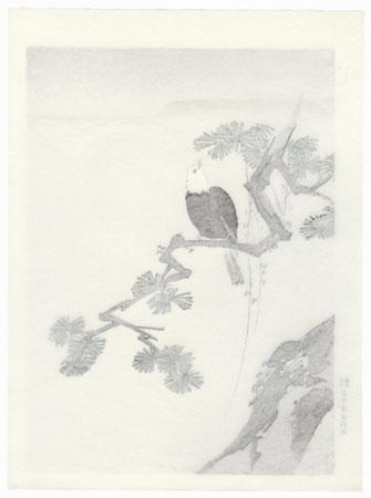 Bird and Pine Tree by Shin-hanga & Modern artist (not read)