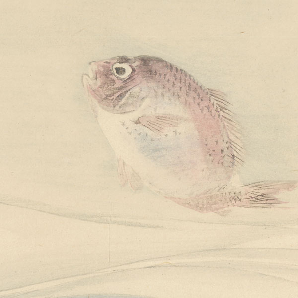 Red Sea Bream by Gekko (1859 - 1920)