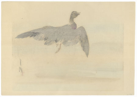 Mallard by Gekko (1859 - 1920)