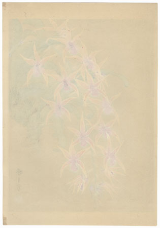 Orchids by Zuigetsu Ikeda (1877 - 1944)