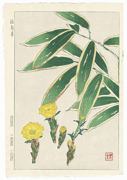 Pheasant's Eye by Kawarazaki Shodo (1889 - 1973)