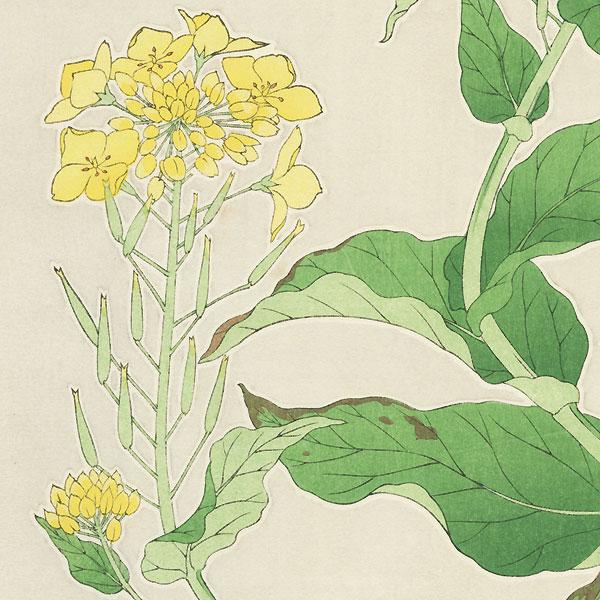 Rapeseed by Kawarazaki Shodo (1889 - 1973)
