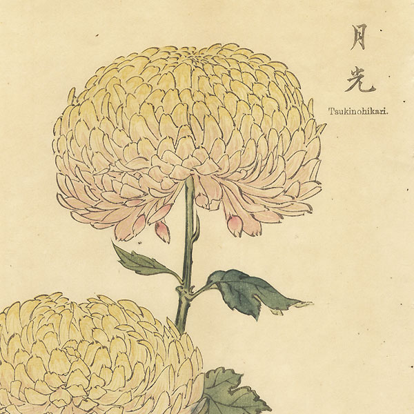 A Clearance Opportunity! Meiji or Edo era Original by Keika Hasegawa (active 1892 - 1905)
