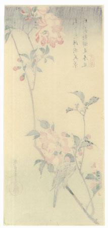 Bullfinch in Flowering Cherry Tree  by Hiroshige (1797 - 1858)