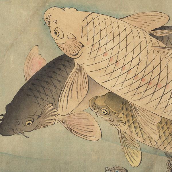 Carp beneath Wisteria, 1889 by Yoshitoshi (1839 - 1892)
