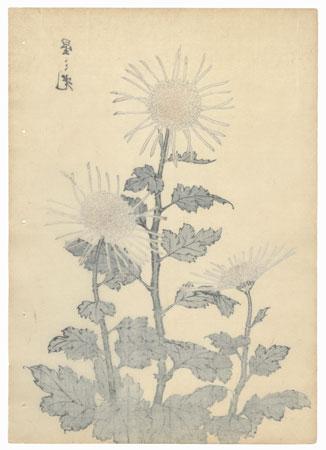 Luster of Stars Chrysanthemum by Keika Hasegawa (active 1892 - 1905)