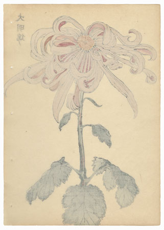 Great Ming Brocade Chrysanthemum by Keika Hasegawa (active 1892 - 1905)