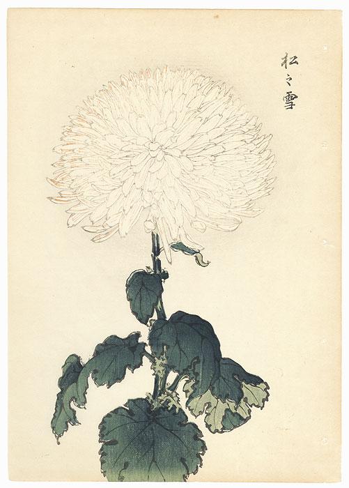 White Chrysanthemum by Keika Hasegawa (active 1892 - 1905)