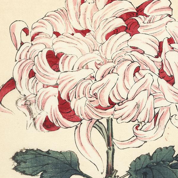 Luster of Sword Chrysanthemum by Keika Hasegawa (active 1892 - 1905)