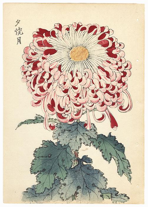 Moon at Sunset Chrysanthemum by Keika Hasegawa (active 1892 - 1905)