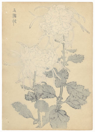 General of Three Provinces Chrysanthemum by Keika Hasegawa (active 1892 - 1905)