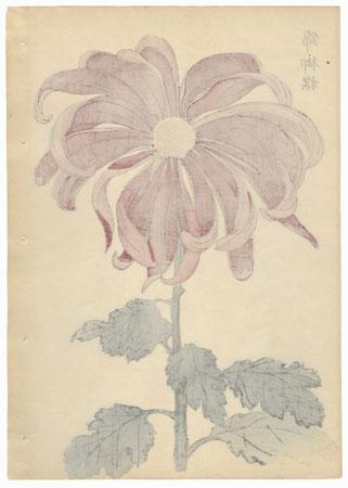 Imperial Flag Chrysanthemum by Keika Hasegawa (active 1892 - 1905)