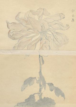 Large Yellow Chrysanthemum by Keika Hasegawa (active 1892 - 1905)