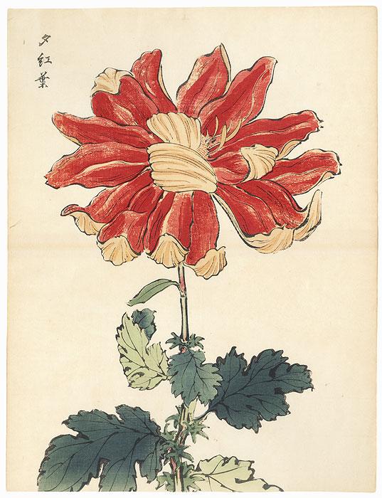 Crimson Leaves of Evening Chrysanthemum by Keika Hasegawa (active 1892 - 1905)