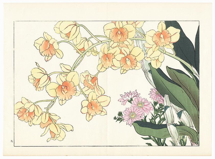 Aster Novae Anglae and Dendrobium Chrysotoxum by Tanigami Konan (1879 - 1928)