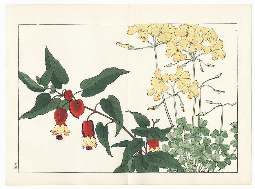 Oxalis and Abutilon by Tanigami Konan (1879 - 1928)