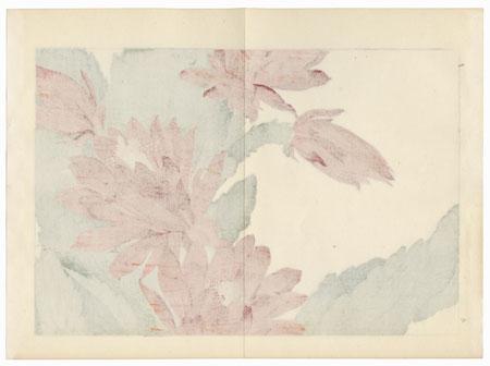 Phytocactus by Tanigami Konan (1879 - 1928)