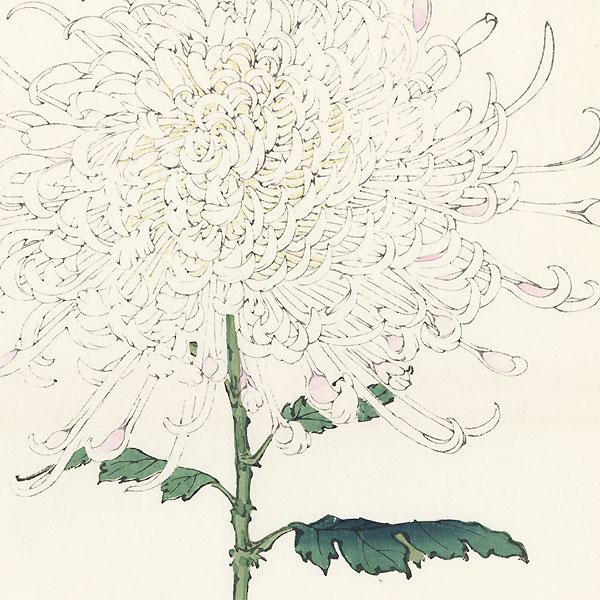 Large White Chrysanthemum by Keika Hasegawa (active 1892 - 1905)