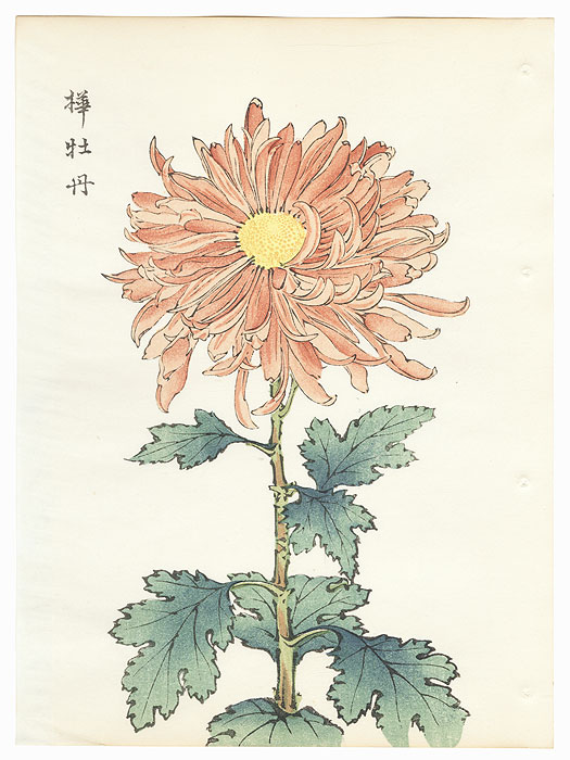 Brown Peony Chrysanthemum by Keika Hasegawa (active 1892 - 1905)