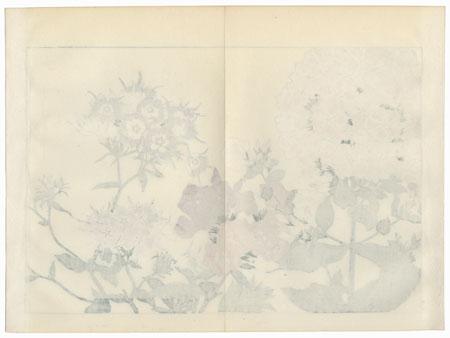 Phlox by Tanigami Konan (1879 - 1928)