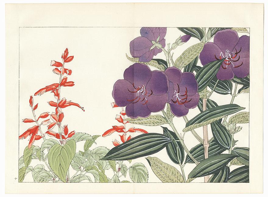 Melastoma and Salvia by Tanigami Konan (1879 - 1928)