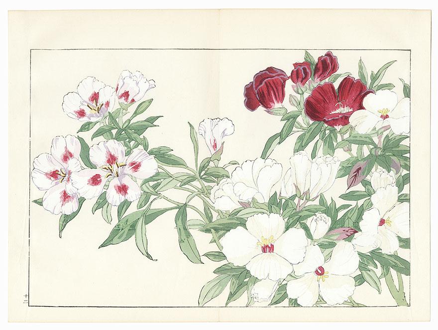 Godetia by Tanigami Konan (1879 - 1928)