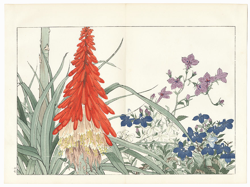 Lobelia and Tritoma by Tanigami Konan (1879 - 1928)