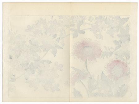 Plumbago and Gallardia by Tanigami Konan (1879 - 1928)