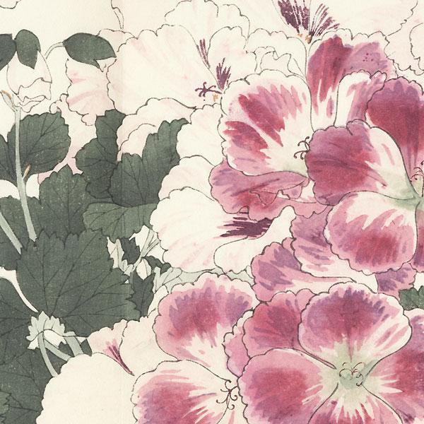 Pelargonium by Tanigami Konan (1879 - 1928)