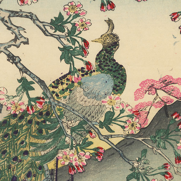 Peacock in a Blossoming Cherry Tree, 1896 by Meiji era artist (not read)