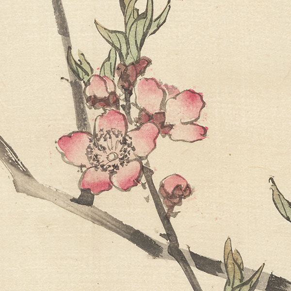 Blossoming Cherry Branch by Bairei (1844 - 1895)