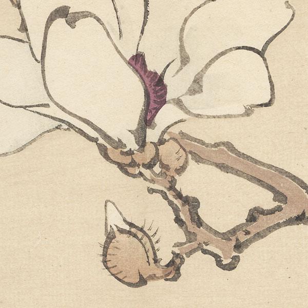 Magnolia Blossom by Bairei (1844 - 1895)
