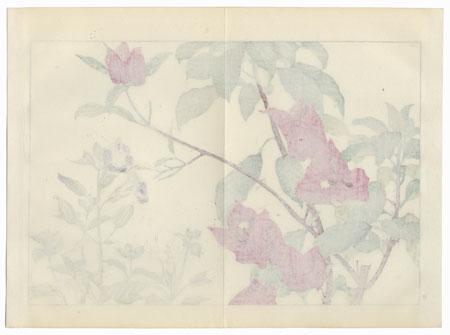 Torenia and Bougainvillea by Tanigami Konan (1879 - 1928)