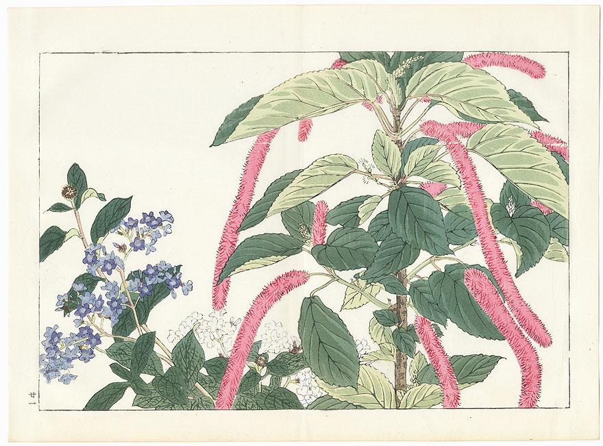 Acalypha and Heliotrope by Tanigami Konan (1879 - 1928)