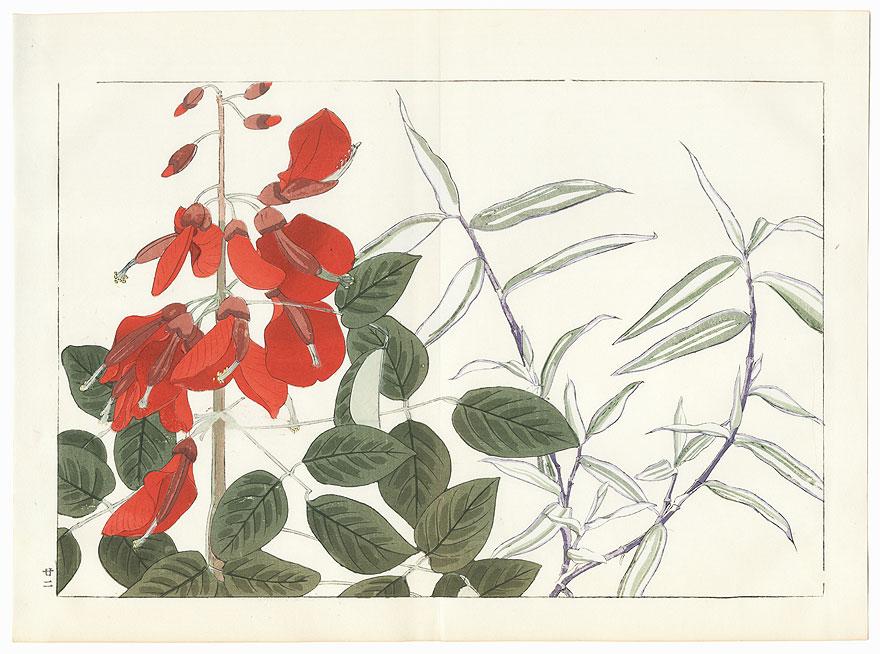 Panicum and Erythrina by Tanigami Konan (1879 - 1928)
