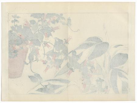 Manettia and Maranta by Tanigami Konan (1879 - 1928)