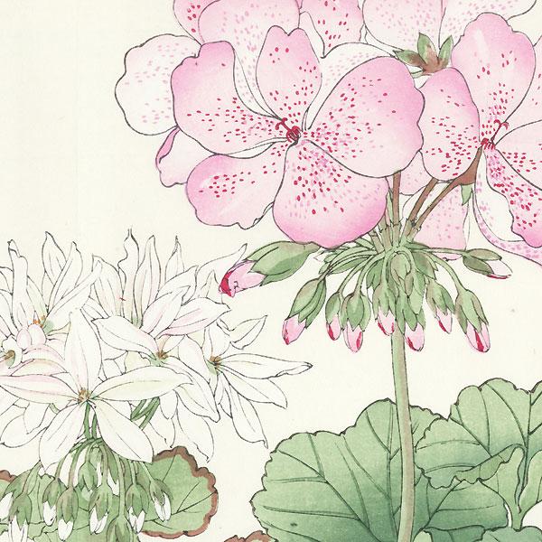 Geranium by Tanigami Konan (1879 - 1928)
