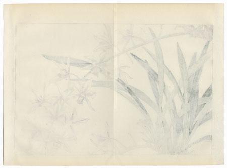 Cymbidium by Tanigami Konan (1879 - 1928)