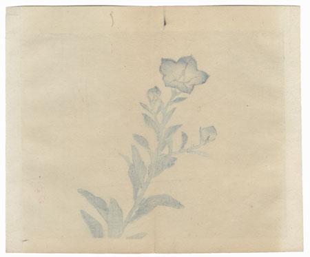 Bellflower by Bairei (1844 - 1895)