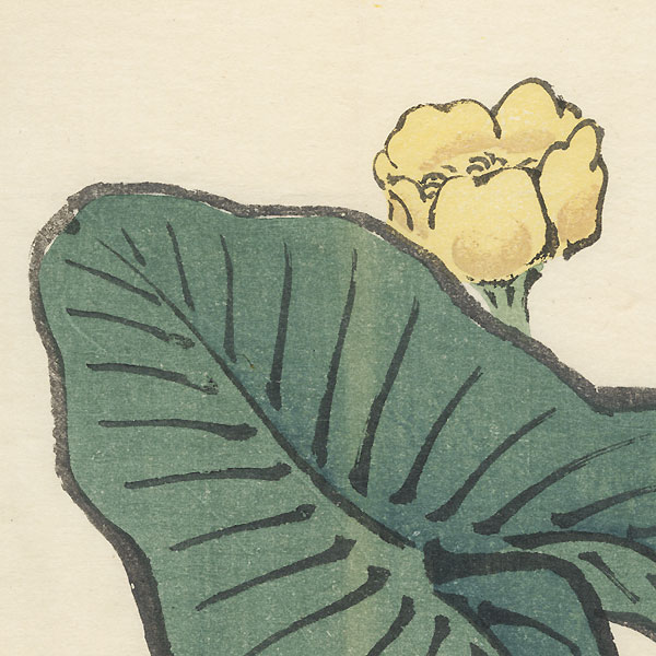 Japanese Pond Lily by Bairei (1844 - 1895)