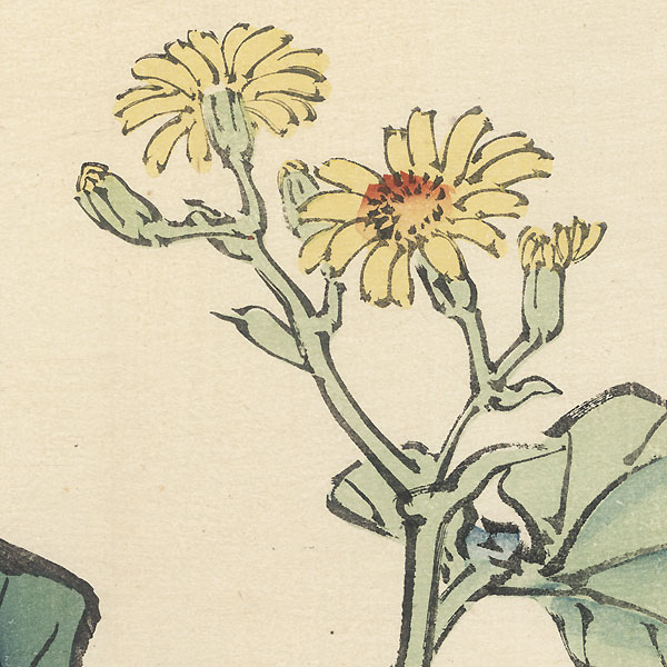 Leopard Plant by Bairei (1844 - 1895)