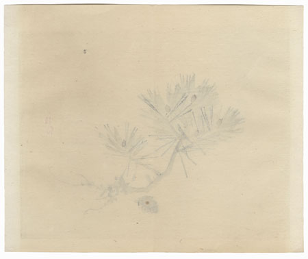 Pine Branch by Bairei (1844 - 1895)