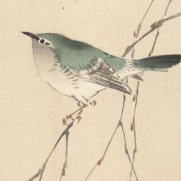 Bird on a Branch by Bairei (1844 - 1895)