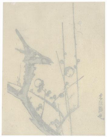 Bird on a Blossoming Plum Branch by Shin-hanga & Modern artist (not read)