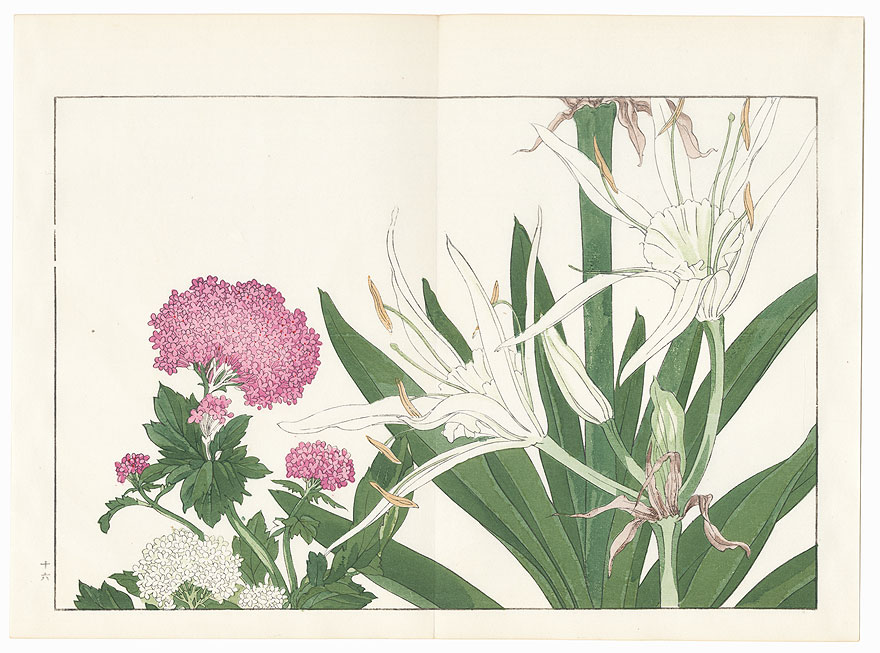 Cambpetum Grandiflorum and Centranthus by Tanigami Konan (1879 - 1928)