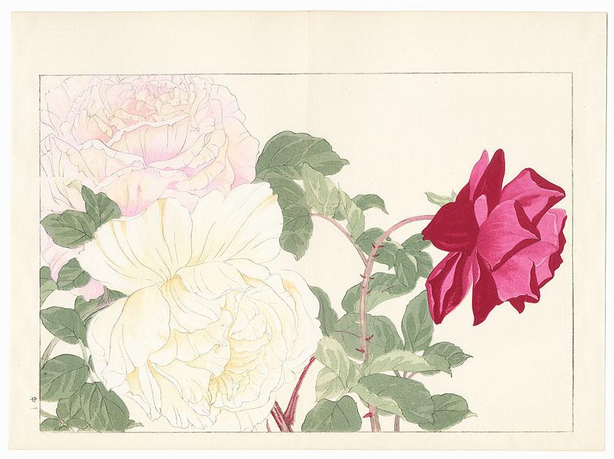 Rose by Tanigami Konan (1879 - 1928)