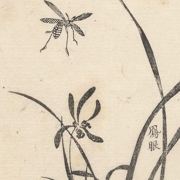 Insect and Irises by Edo era artist (unsigned)