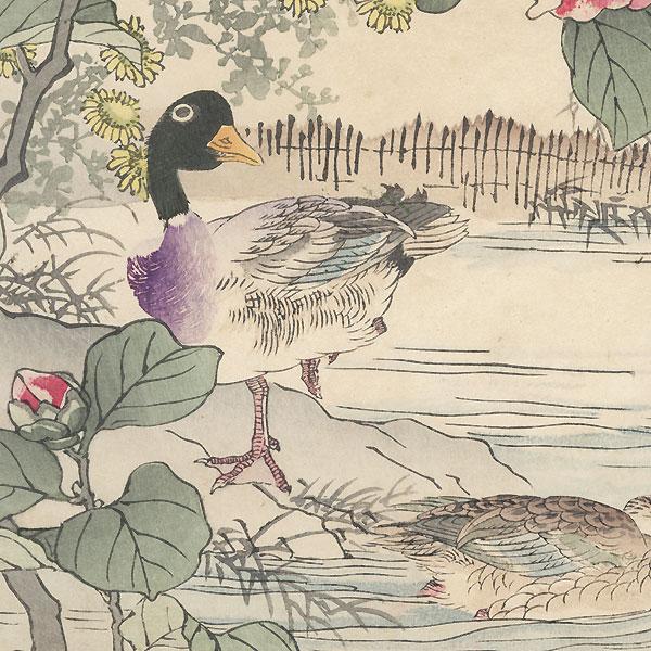 Ducks and Camellia by Kono Bairei (1844 - 1895)