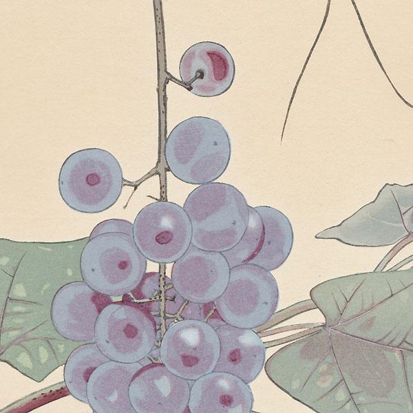 Grapes and Japanese Tree-frog by Rakusan Tsuchiya (1896 - 1976)