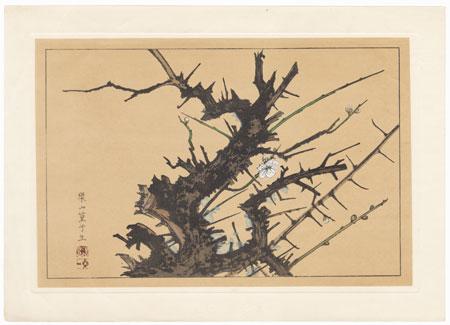 Wild Plum by Rakusan Tsuchiya (1896 - 1976)